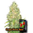 Sugar Black Rose