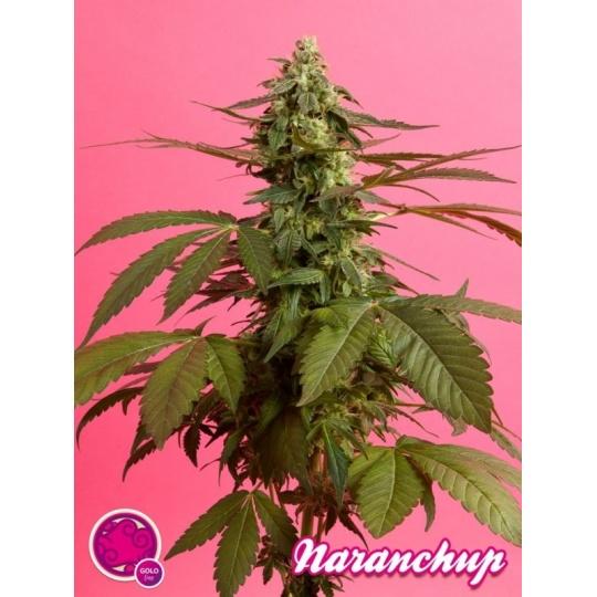 Naranchup