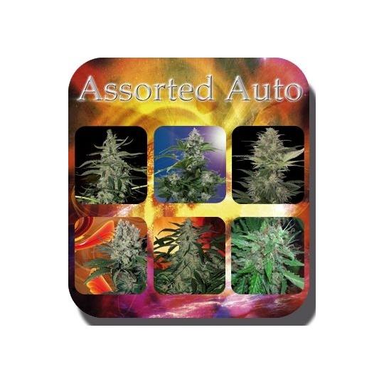 Assorted Auto