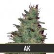 AK Automatic