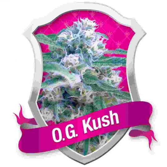 O.G. Kush