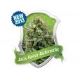 Jack Herer Automatic