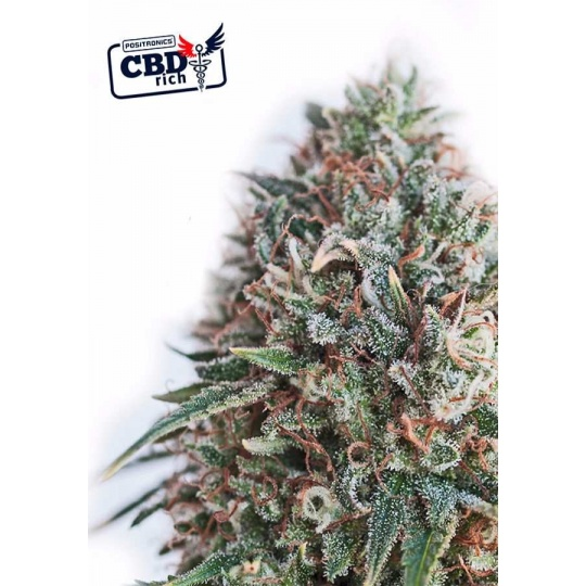 CBD + Critical 47