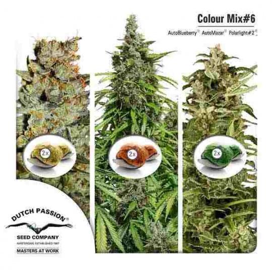 Colour Mix 6