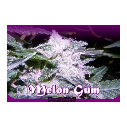 Melon Gum